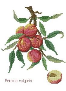 Схема Персики