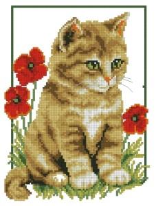 Схема Рыжий котенок в маках