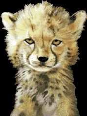 Схема Маленький гепард