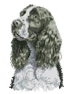 Схема Спрингер спаниель черно-белый