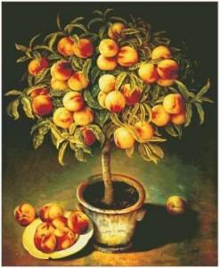 Схема Персиковое дерево