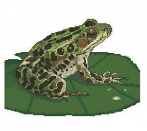 Схема Пятнистая лягушка