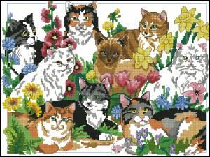 Схема Коты / Cats