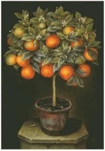 Схема Апельсинновое дерево