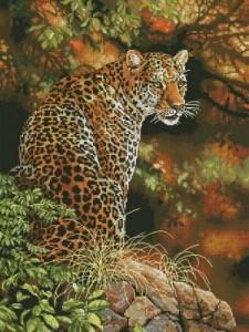 Схема Леопарды / Leopards Gaze