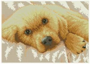 Схема Золотой щенок