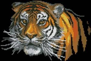 Схема Тигр на черном