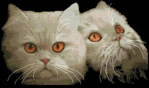 Схема Персидская кошка