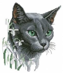 Схема Русская голубая (кошка)