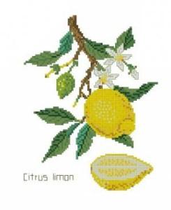 Схема Лимон
