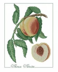Схема Персик