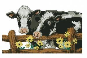 Схема Коровы