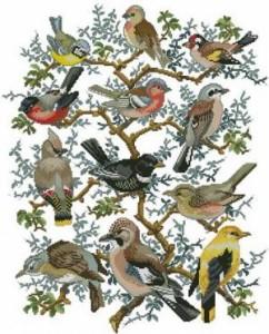 Схема Птички. Робин