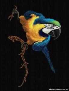 Схема Попугай
