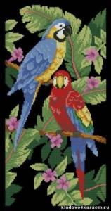 Схема Тропические птицы