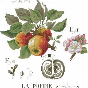 Веточка яблони