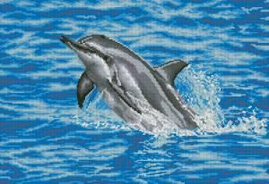 Схема Дельфин