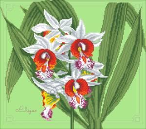 Схема Орхидея