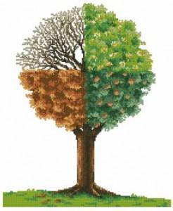 Дерево - сезоны