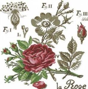 Роза (пышная)