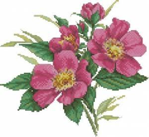 Розовый шиповник (темный)