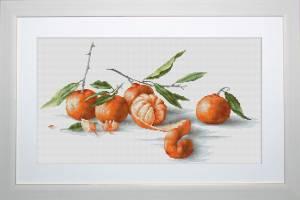Ветка мандаринов