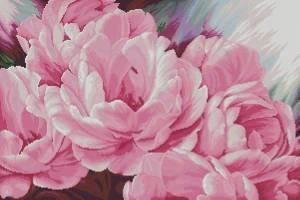 Розовые пионы