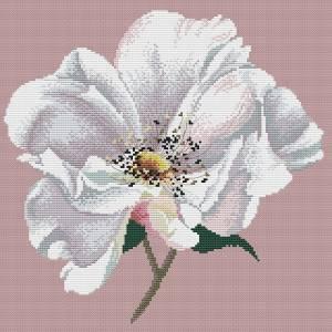 Схема Цветок шиповника