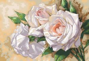 Схема Белые розы