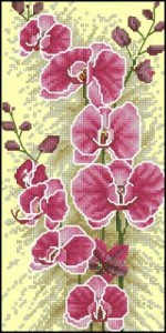 Схема Орхидеи
