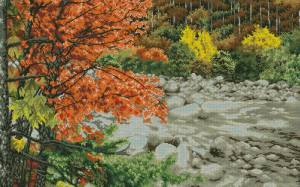 Клен у реки