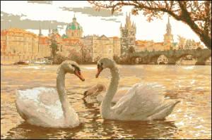 Лебеди на реке в Праге