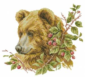 Схема Бурый медведь