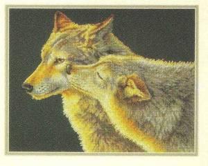 Схема Поцелуй волка / Wolf kiss