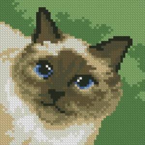 Схема Кошка