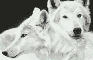 Пара белых волков
